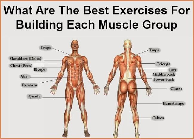 Muscles that you can build using the methods in this article