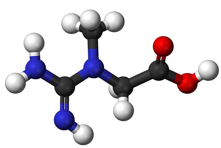 Ball and stick model of creatine which is vitally important in maintaining athletic performance