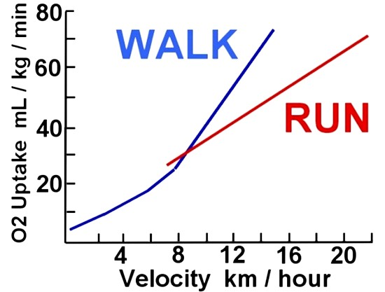 Work expended at various rates for walking and running