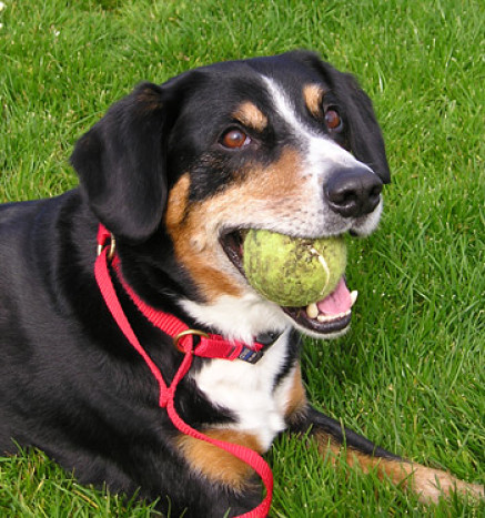 Dogs love a game when running with you and a ball is a great distraction to avoid confrontation with people and other dogs